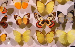 Butterfly Museum and Butterfly Farm
