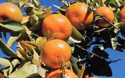 Watkins Orchard Fruit Picking