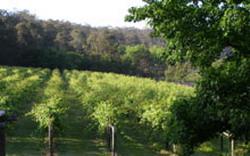 Jubilee Vineyard Estate