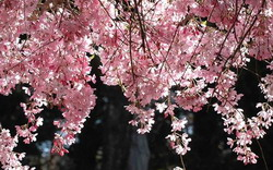 Wildwood Garden Spring