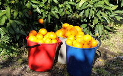 Fords Farm Fruit Picking