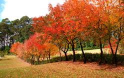 Wildwood Gardens in Autumn