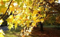 Rouse Hill House & Farm Autumn Harvest